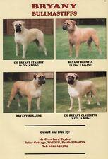 BULLMASTIFF DOG BREED KENNEL ADVERT PRINT PAGE BRYANY KENNELS DOG WORLD