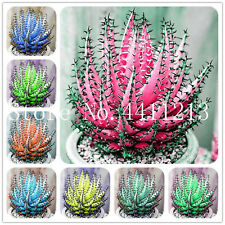 Color Aloe Bonsai Seeds Plants Succulent Cactus Edible Medicinaland Rare 100pcs