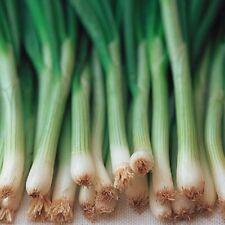 Vegetable Onion Ishikura Bunching 1000 seeds