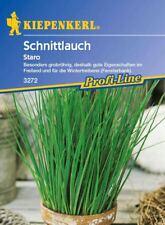 Kiepenkerl - Schnittlauch grobröhrig * Staro * 3272 gut für Wintertreiberei