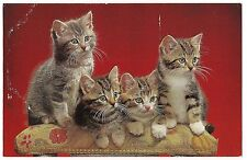 FOUR Tiger Striped KITTENS on a Chair Back Vintage Postcard Cat Red Background