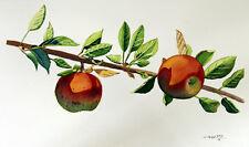 Red Apple 2, Fruit, Original Watercolor Painting, Signed, Art Deco