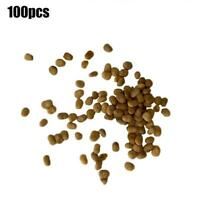 500 Graines Jicama pachyrhizus erosus Yam Bean Mexican Potato Seeds