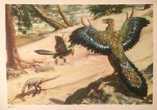 Bird Size ARCHAEOPTERYX & COMPSOGNATHUS Color Print By Z Burian 1963 VF 9x13""