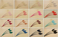 Arrowhead Turkey Quill Feather for Millinery Hat Trim Fascinators Craft Supplies