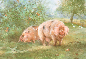 * GLOUCESTER OLD SPOT PIGS IN APPLE ORCHARD * PRINT OF A PAINTING BY BENINGFIELD