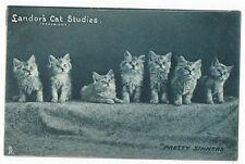 "POST CARDS CATS  LANDOR`S CAT STUDIES, ""PRETTY SINNERS"""