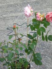Pflanzenstützringe 6 Stck., , Staudenring, Pflanzenhilfe, Pflanzenring,