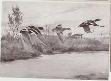 WILD DUCKS Flying Moorland Birds Artist Signed German PC 1952