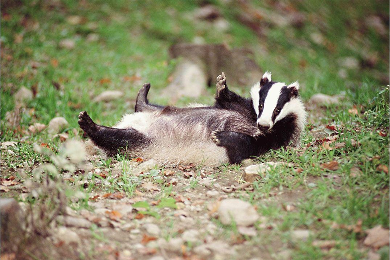Bertie Badger's Brilliant Things