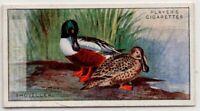 Shoveler Duck Spatula clypeata Gamebird c90  Y/O Ad Trade Card