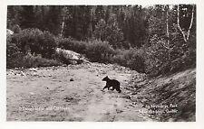 Bear Cub O'Connell Lodge LAC DES LOUPS La Vérendrye Park Quebec 1940-50s RPPC