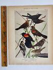 Vtg Original Print Plate #73 Blackbird Birds of New York 1916 Fuertes Nature art
