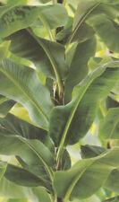 Rasch African Queen II 473407 Tapete Vlies Bananenblätter tropisch grün