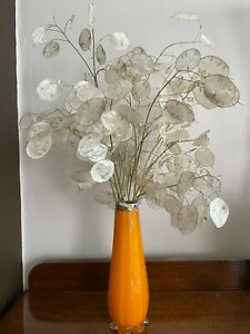 Lunaria annua (Annual honesty) 50 seeds pack