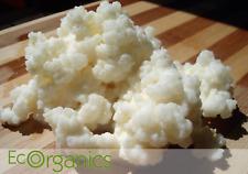 4 TBSP *Live* ♡ Organic Milk Kefir Grains ♡ *Free Ship W/ instructions & Recipes