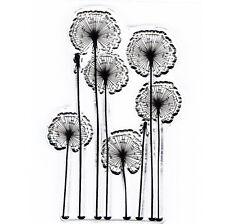 Floristería floralife cortadas frescas Flor alimentaria transparente Sachets floristería clases 1000 O 10