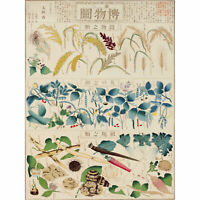 Kato Chikusai Species of Flora Fauna Insects Japanese Huge Wall Art Poster Print