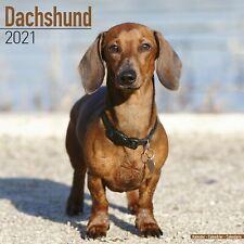 Dachshund Calendar 2021 Premium Dog Breed Calendars