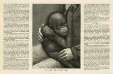 1881-ANTIQUE PRINT ANIMAL Orang-Doctor Baby Monkey Man (159 A)