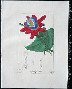 Bessa,P.Flore des Jardiniers,Passionflower,Passiflora alata,handcol.Engr.c.1836