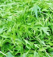 Herb Rocket Wild - 12000 seeds