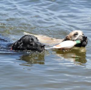 REMINGTON DOG FOAM FOWL TRAINER Mallard Ring Neck B&W Bobwhite Quail 3 SIZES NWT