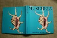 Sammlerbuch alte Muscheln, seltene Muscheln, Sammlungen, Kunsthandwerk 1969