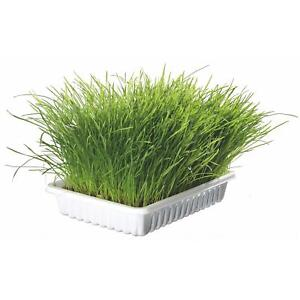 Trixie Cat/Kitten Grass Bowl/Tray 100g Grow Your Own Aids Digestion 100% Natural