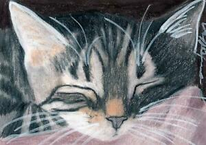 ACEO original pastel drawing tabby cat catnap chat katze by Anna Hoff