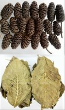 New Promotion 20g Large Premium Quality Alder Cones & 20 Organic Walnut Leaves