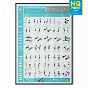 Dumbbell Fitness Workout Training Chart Poster Exercise Print *LAMINATED*