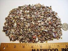 1 Full Cup Seashells Tiny Beach Sea shells crafts wedding miniature small mixed