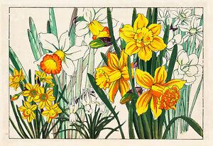Daffodils A1 by Tanagami Konan High Quality Canvas Art Print