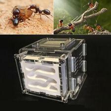 1PC Plaster Ant Farm Ants Work Educational Formicarium LIVE Ants Acrylic Nest