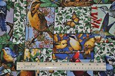 1/2 yard cotton quilt fabric Backyard Birds Collage Bluebirds Hummingbirds Wrens