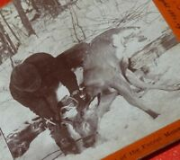 vintage Antique 1901 Snow Hunting Deer Man STEREOSCOPIC Stereoview Rare