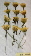 Multicaule Real Pressed Flower Craft Embellishments