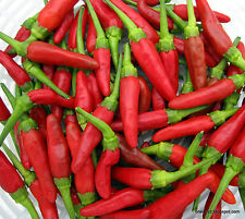 Liveseeds-peperoncino / Chilli Pepper Bird's eye - 40 semi