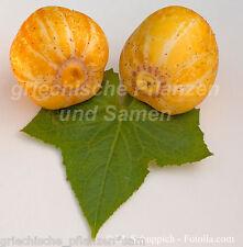 Zitronen-Gurke 5 frischge Samen alte Sorte aus Australien  Gurke Gurken
