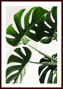 Botanical Swiss Cheese Monstera Plant Leaf Leaves Poster Art Print(unframed)