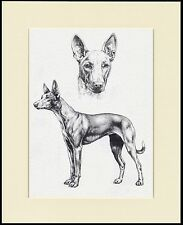 PHARAOH HOUND LOVELY DOG SKETCH PRINT MOUNTED READY TO FRAME