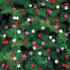 Cypress Flower Seeds - Vine - Mix - Bulk *