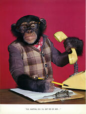 1 Vintage Art Photo Page from Chimp Chat Book 1960 Monkey in Office Cubicle work