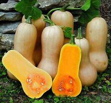 Heirloom Butternut Squash 10 Finest semi-liveseeds -