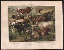 Chromo-Lithografie 1896: Rinder. Waldler Schlag, Podolischer Schlag, Bretagner