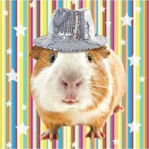 Disco Guinea Pig Bling Luxury Glitter Blank Art Greeting Card Animal Lovers