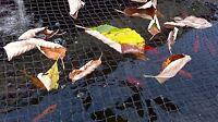 Pondh2o Black Premium Pond Protection Netting With Fixing Stakes Range Of Sizes