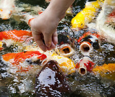 """50 Lot Assorted 3-4"""" Standard Live Koi for Pond Fish FREE OVERNIGHT SHIPPING"""