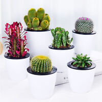 10X/Pack Cactus Seeds Seed Plant Home Balcony Garden Bonsai Easy Grow Decor Gift